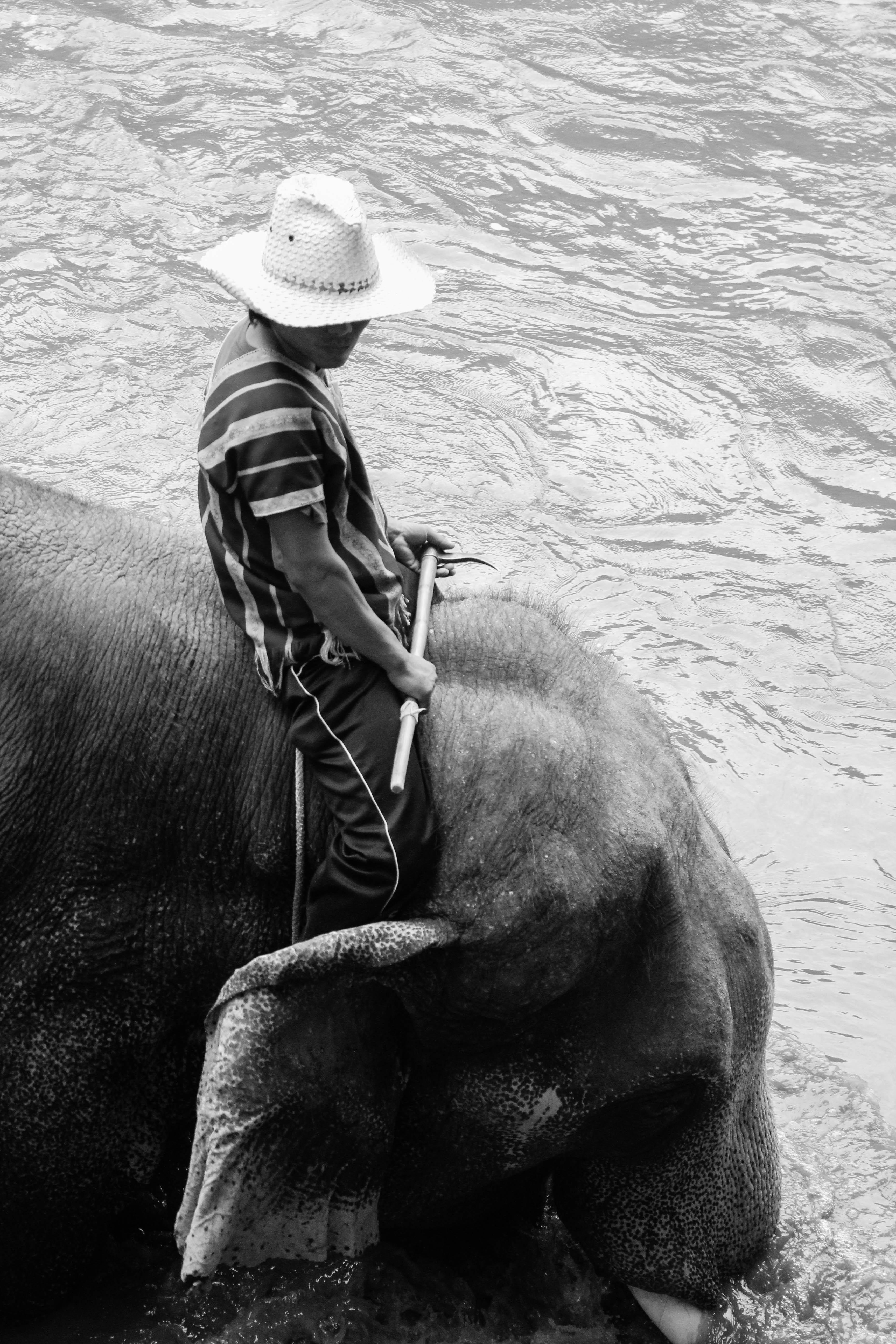 Animal rides (1)