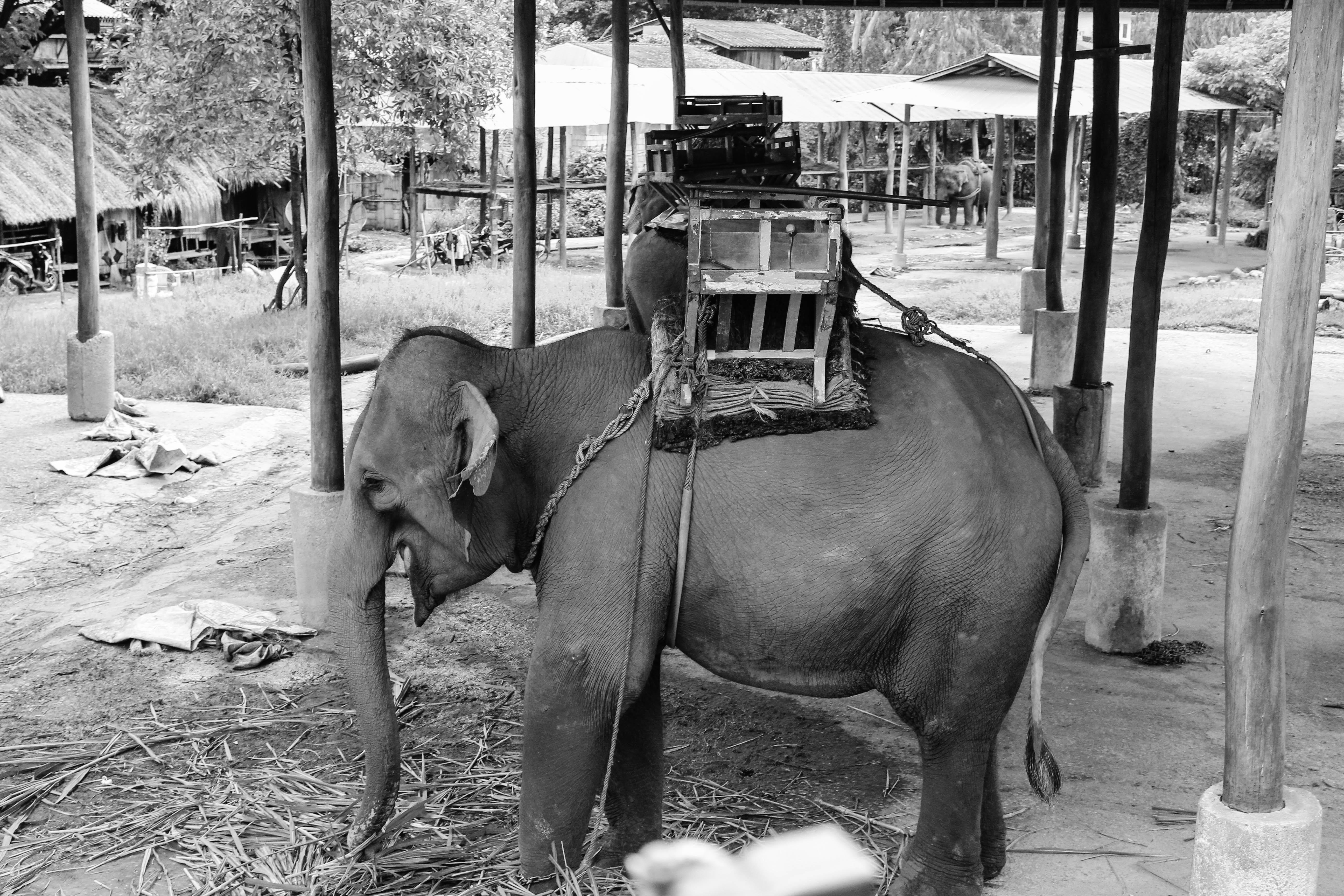 Animal Ride